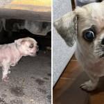portada perrito abandonado 14 anos fallecio dias ser rescatado - Perrito abandonado de 14 años falleció a días de ser rescatado. Pasó sus últimos días lleno de amor
