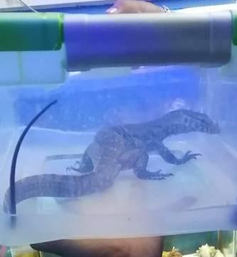 rescatan animales exoticos mercado venustiano carranza - PROFEPA rescata más de 60 animales exóticos de mercado de la CdMx