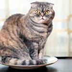El ano de tu gato toca todas las superficies donde se sienta - ¿El ano de tu gato toca todas las superficies donde se sienta?