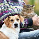 Estas protegiendo a tu mascota contra los parasitos - ¿Estás protegiendo a tu mascota contra los parásitos?