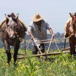 agricultores eu - México responde a EU con denuncia por abusos en el sector agrícola
