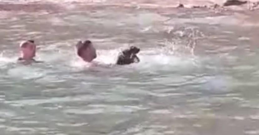 jovenes perro rescate mar - Jóvenes saltaron de su bote y salvaron a un perro que se ahogaba. El can tenía 9 días desaparecido