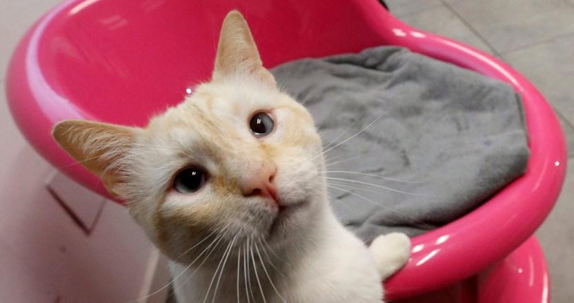 befunky collage 2 - Los gatos que duermen con sus dueños pueden contraer COVID: estudio