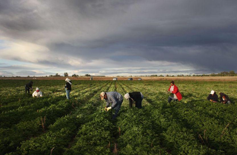 gettyimages 129068134 - Llegó la hora de pagar la deuda histórica con nuestros trabajadores agrícolas