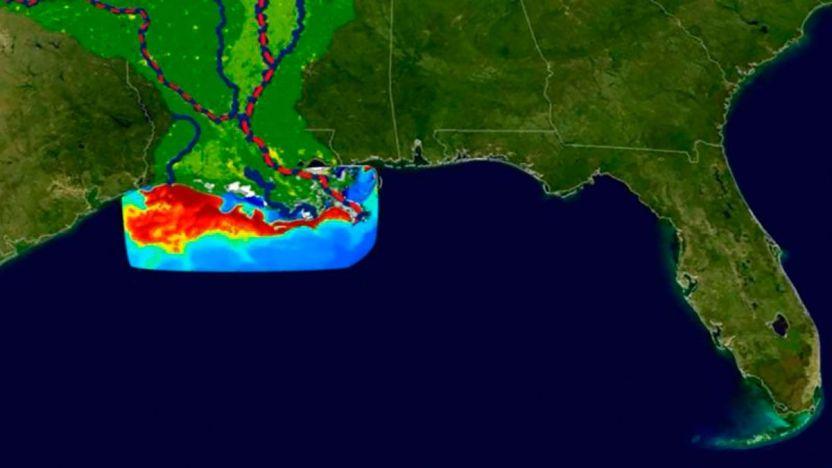 """119789592 06735424 a1f1 4eb7 bf06 61960709bbbe 1 - """"Zona muerta"""" del Golfo de México: la preocupante expansión de esta área en la que la vida marina es imposible"""