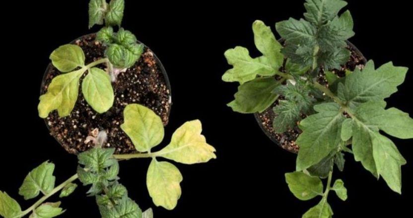 """befunky collage 60 - ¿Cómo """"beben"""" las plantas? Primera observación del agua dentro de raíces lo revela"""