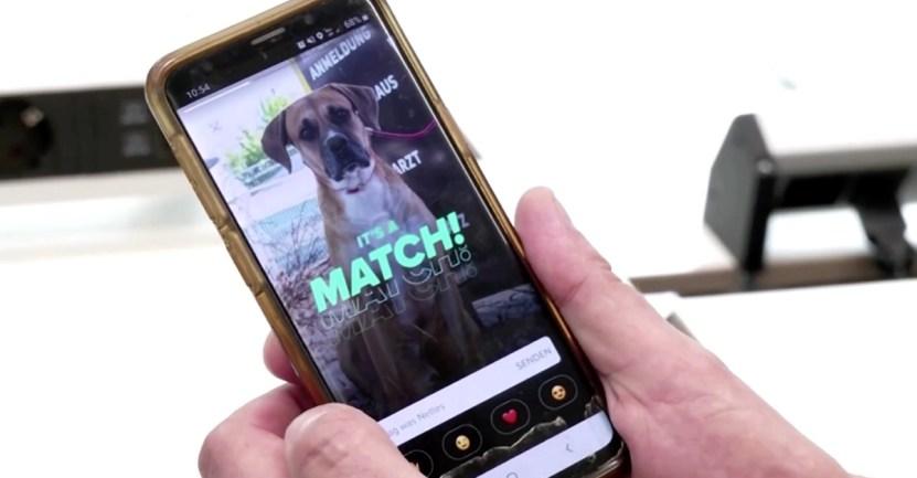 mascota tinder match - Refugio abrió perfiles en Tinder para sus mascotas y ya tienen sus citas. Esperan que sean adoptados