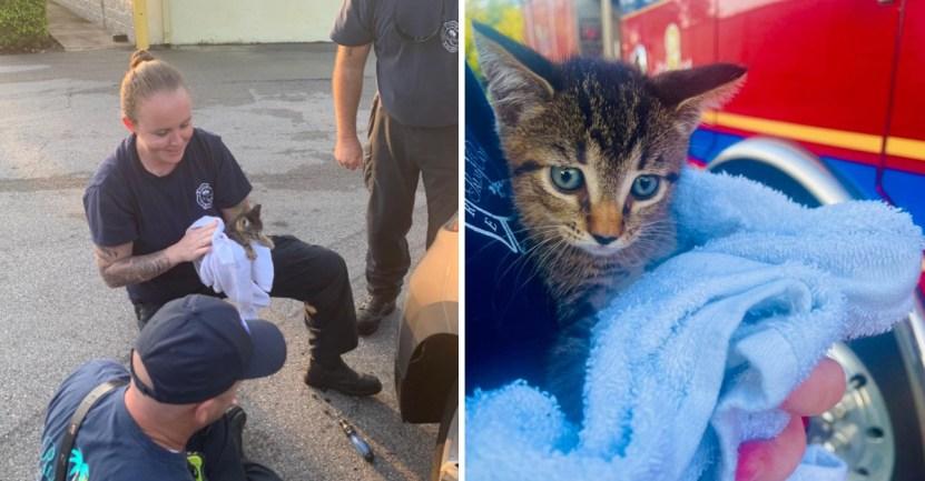 gato rescate bomberos - Gatito fue adoptado por bombero que lo rescató al quedar atrapado en una rueda. Lo llamaron Chevy