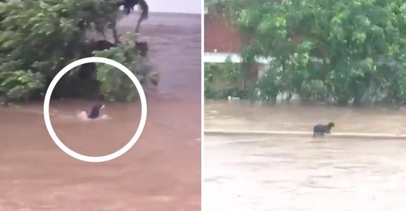 perrito corriente huracan inundacion - Perrito sobrevivió luego de ser arrastrado por la corriente en Mazatlán. Huracán Nora causa estragos