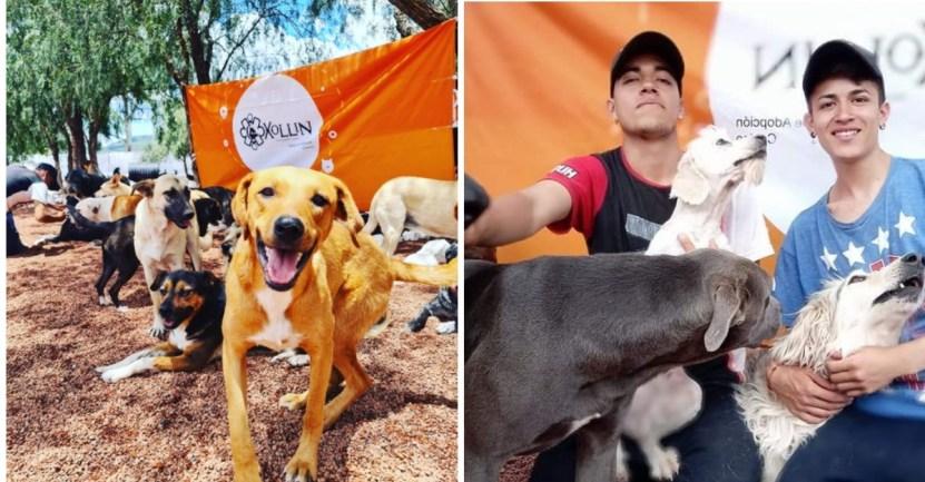 xollin refugio rescate portada - Xollin, el refugio de México que rescata a perritos del maltrato extremo y les devuelve la sonrisa