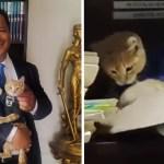 """portada simba abogato 2 - Gatito rescatado de la calle se convierte en abogado de un despacho. Lo llaman el """"abogato"""""""