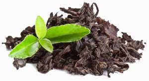 L-theanine plant