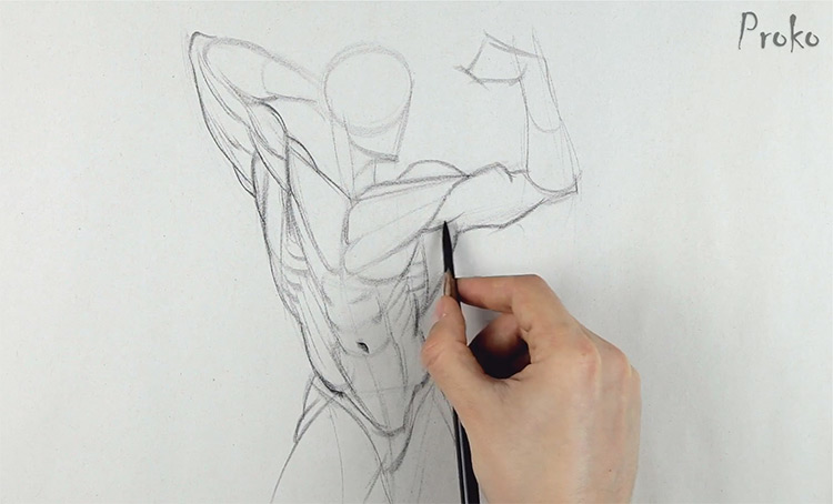proko intro to anatomy