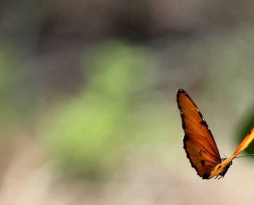vrije vlinder