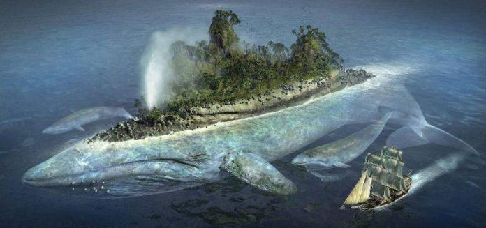 surrealismo - ballena