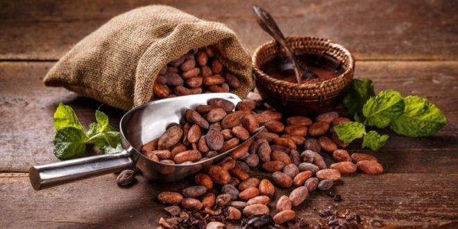 Cacao - Concepto, origen, historia y propiedades