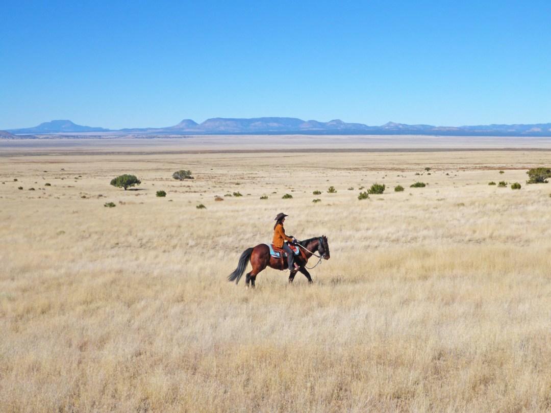 Autumn Ride through Golden Grass