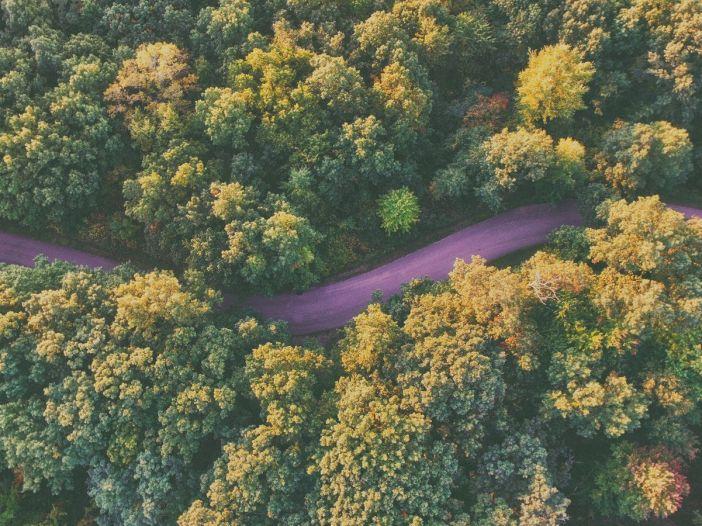 Fotografía de una carretera a través de un bosque como representación del sentido de la vida.