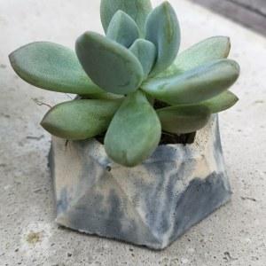Succulent planter main photo marbled concrete