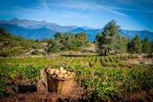 LES PRIMERES PATATES Camp de patates situat en un entorn de muntanya, ideal per a respirar aire pur alhora que es contempla el paisatge. Autor/a: Jordi Barbé Operador/a inscrit: CT/4161/P Joan Barbé Betriu Lloc: Ribera d'Urgellet (Alt Urgell)