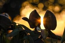 INSTANTS MÀGICS SOTA ELS AMETLLERS La llum de la posta de sol entre els ametllers, a punt per a la collita. Autor/a: M. Mar Campano Operador/a inscrit: CT/4432/P Aran Reguant Jové Lloc: Bràfim (Alt Camp)