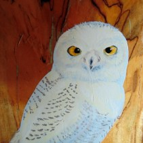 Close up of Tanner Terrace snowy owl