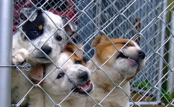 Department Will Enforce New Animal Shelter Standards