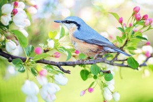 Rural MD Council's Spring Executive Board Meeting – April 5