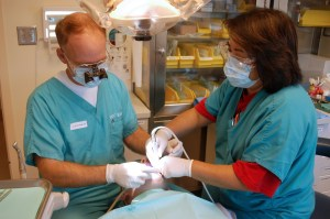 New Maryland Dental Insurance Small But Important Step Forward for Coverage
