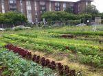 Prince George's Urban Farm Incubator Initiative Wins Urban Ag Conservation Grant