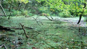 Anne Arundel Using Bogs to Combat Water Pollution & Climate Change
