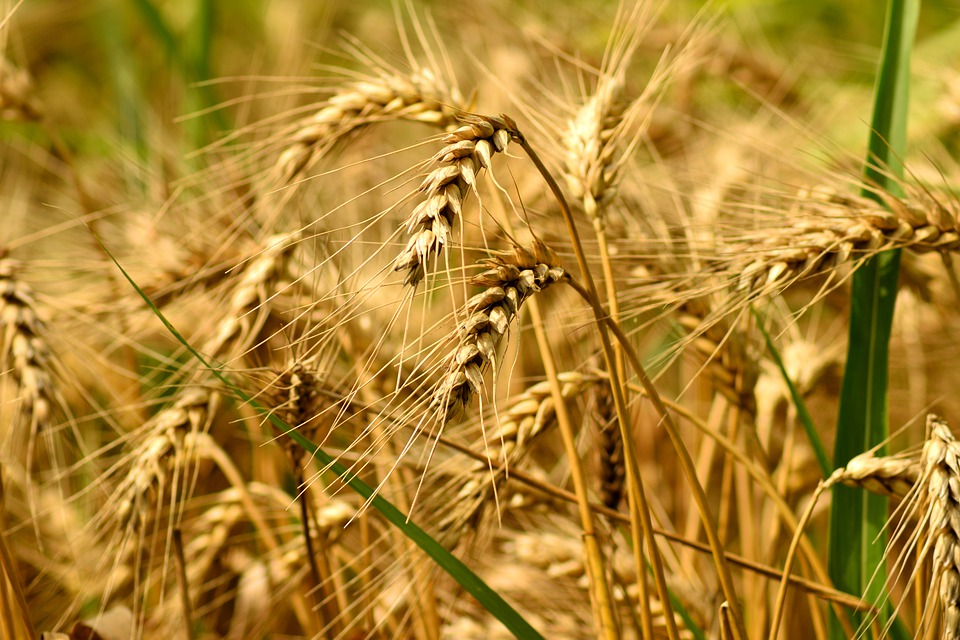 Cecil Harvest Dinner Returns in 2021, Showcasing Agricultural Diversity
