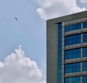 Howard Adopts Bird-Friendly Building Design Standards