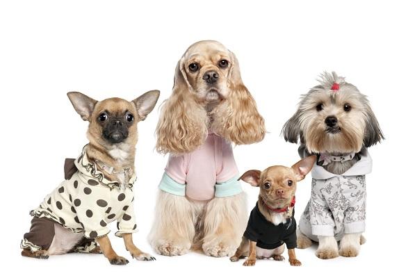 ¿La ropa para mascota es beneficiosa?