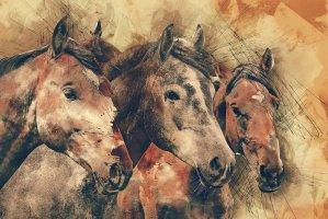 horses, horse head, animals