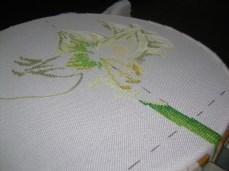 amaryllis (2)