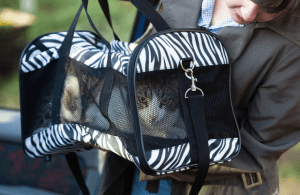 log cabin pets - Cat in travel cat carrier