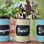 DIY Herb Garden Planters