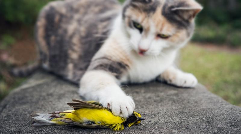 Resultado de imagem para gato feral com caça na boca