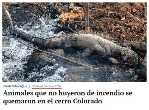 Checamos! Para criticar suposto descaso com a Amazônia, celebridades e líderes políticos publicam imagens antigas 33