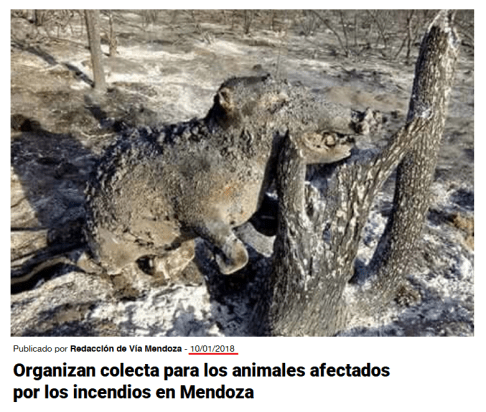 Checamos! Para criticar suposto descaso com a Amazônia, celebridades e líderes políticos publicam imagens antigas 35