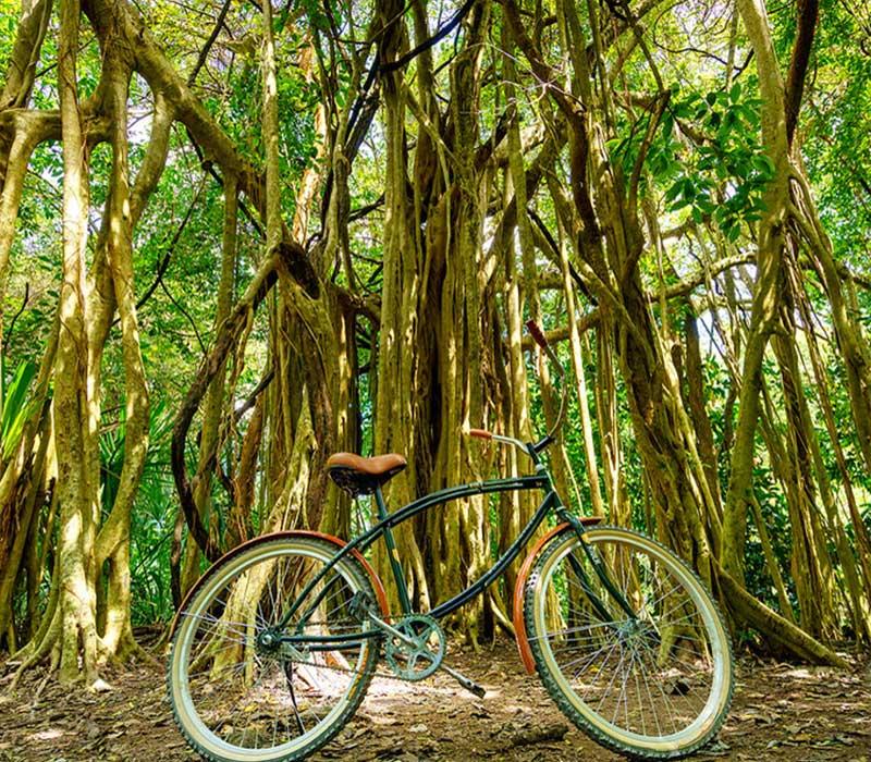 Conexstur-tour-operator-mexico-partners-condor-verde-trips-hotel-bike-coba