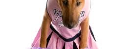 Cheerleader dog