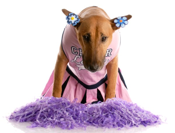 Cheerleader dog