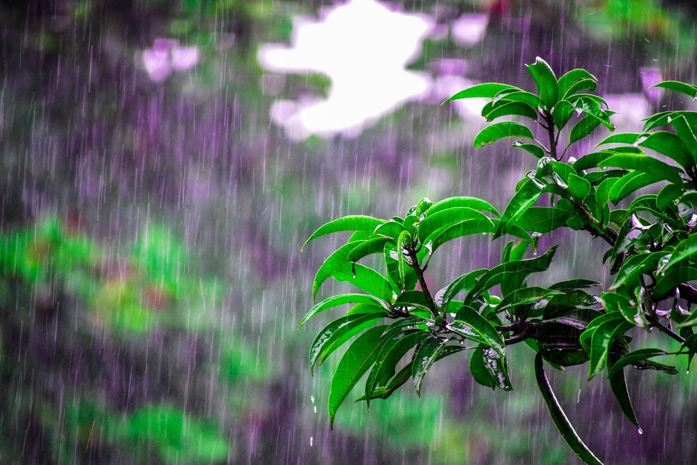 Rain pouring over plants