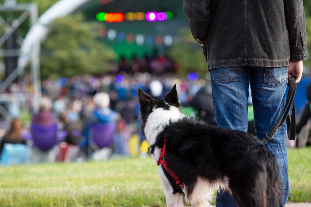 Dog in the audience at the Green Heart Festival