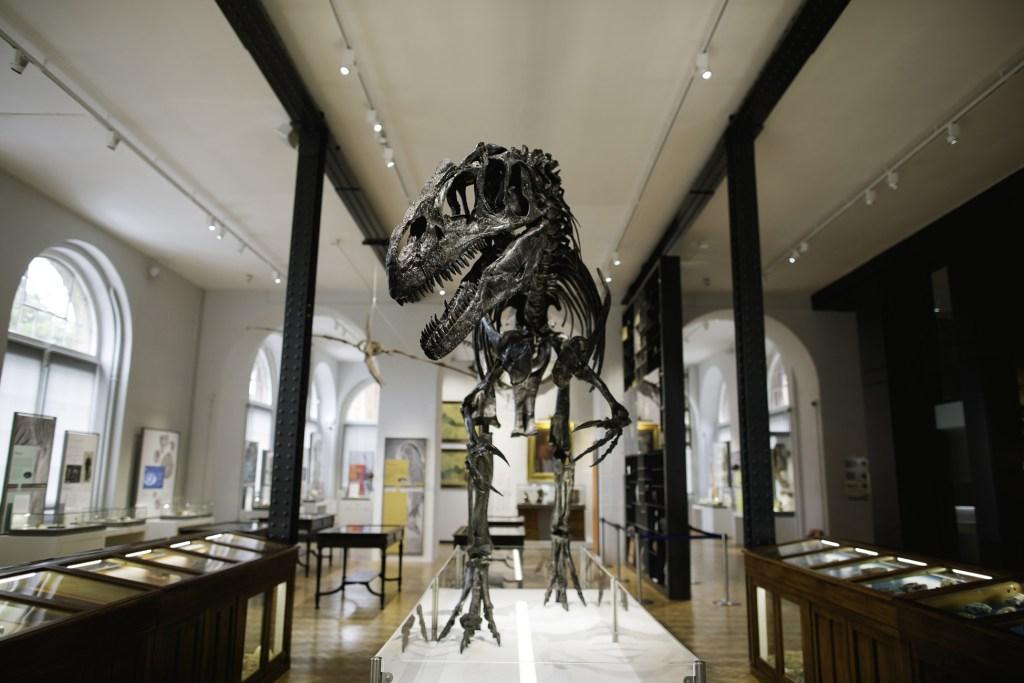 Dinosaur skeleton at Lapworth Museum of Geology
