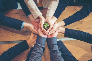 Business people holding their hands together to support seedling growth; sustainable events concept.