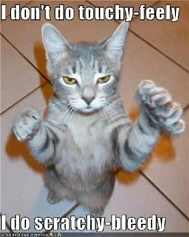 cat standing on hind legs with paws out