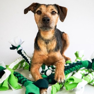 Tug toys & Snuffle Balls also available!